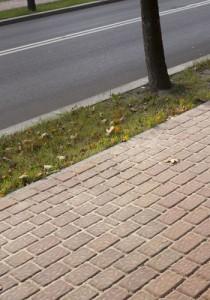 barwy jesieni gladki2