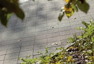 Obrzeze chodnikowe szary gladki Complex szary plukany 6
